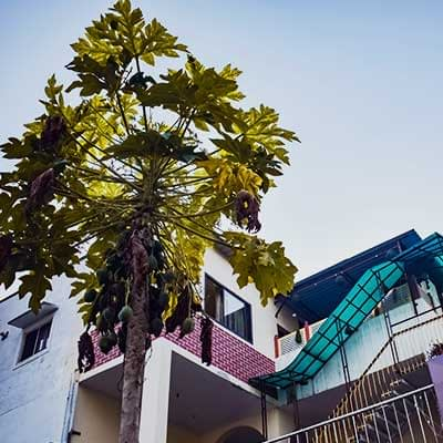 Hostel Papaya Tree